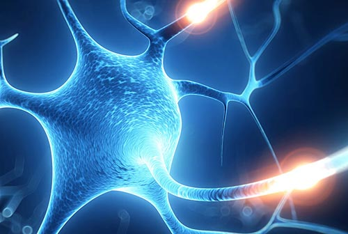 Treatment of neurological disorders with fetal stem cells